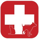 bigstock-Pet-First-Aid-14539931