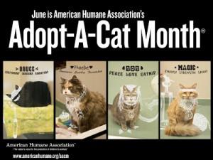 adopt a cat moth