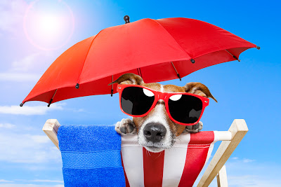 bigstock-Dog-sunbathing-33362399