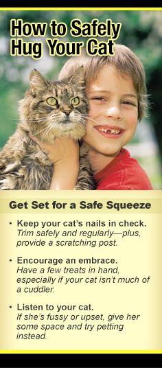 safefy hug cat