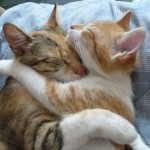 cats-hugging-11162010-12