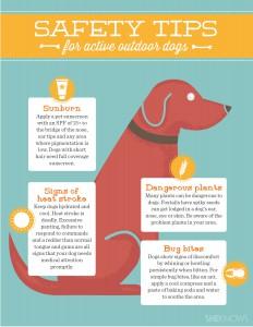 Outdoor Fun Dog Safety Tips