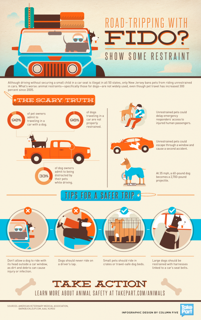 Driving with your dog