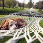 dog-resting-in-a-hammock-20229-400x250